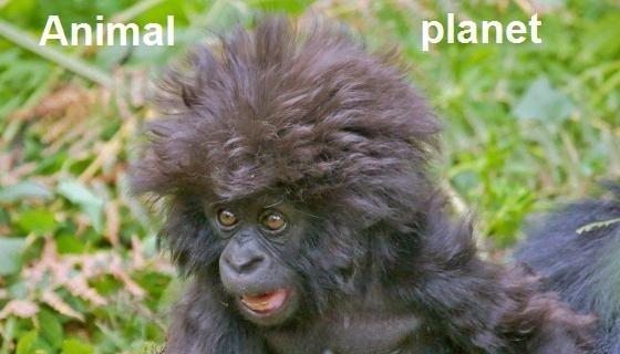 Iptv канал Animal planet